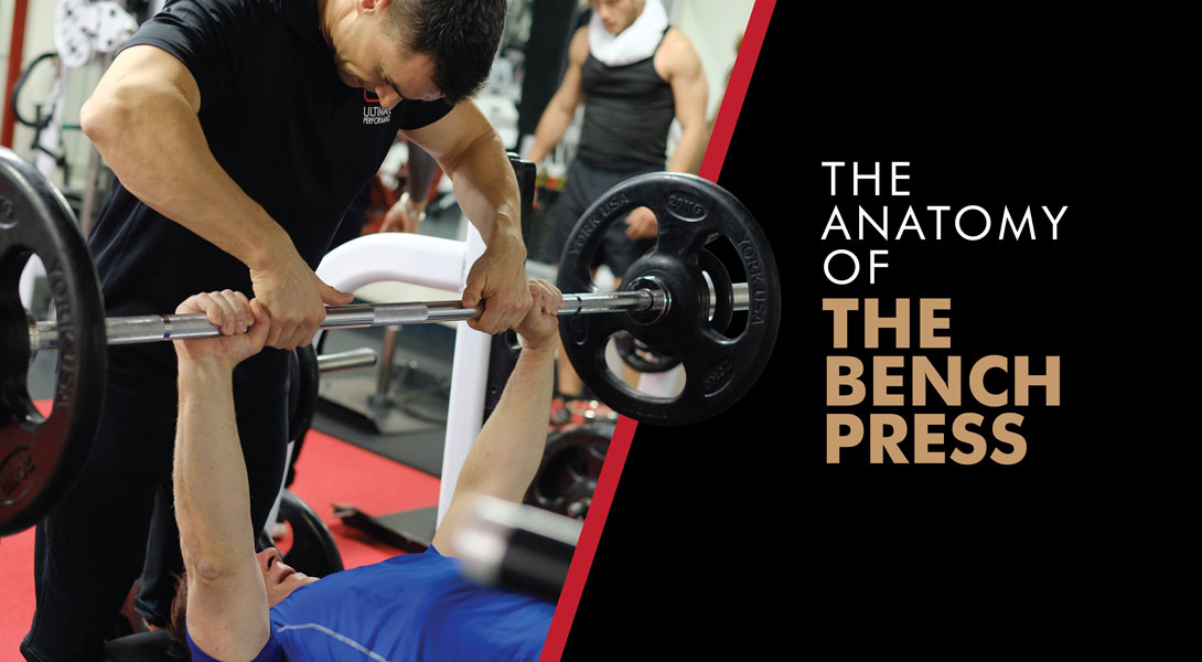 the anatomy of the bench press